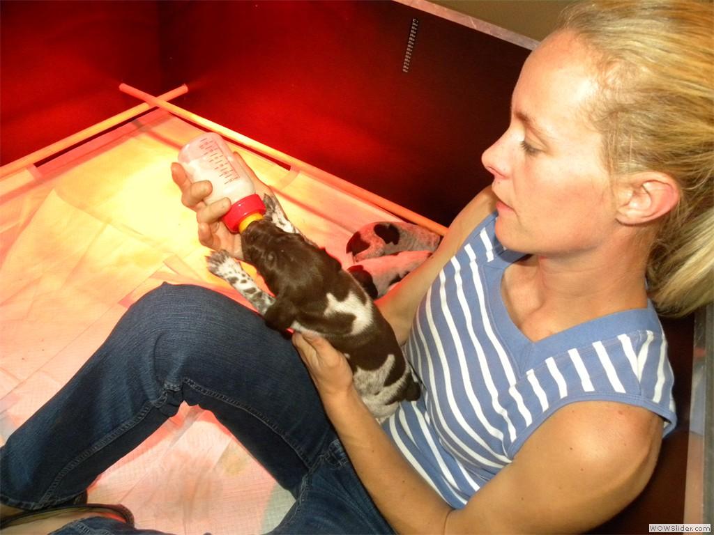 Duitse staande korthaar pups -Du Domaine Chablesse